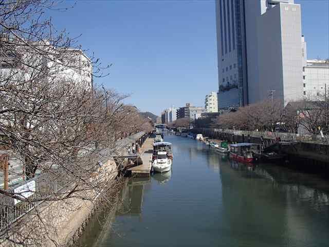 Horikawasakura2busaki_r