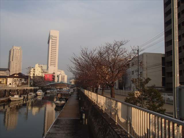 Sakura3_r