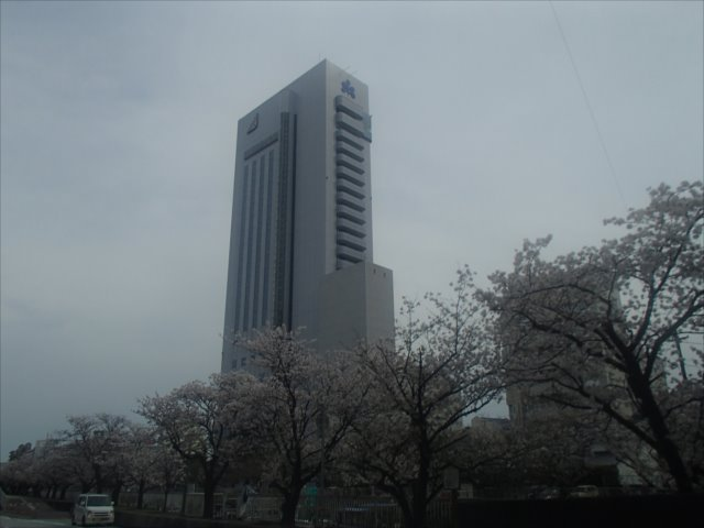 Horikawqasakuran2_r