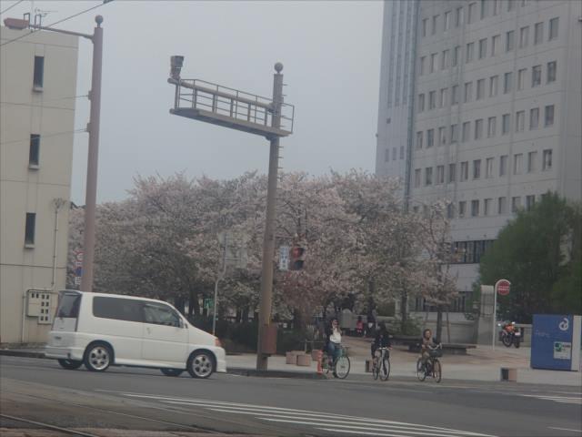Sakurakutanda_r