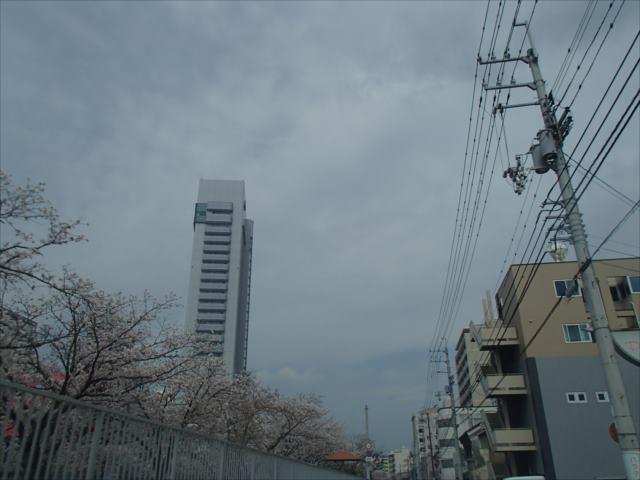 Sakura412_r